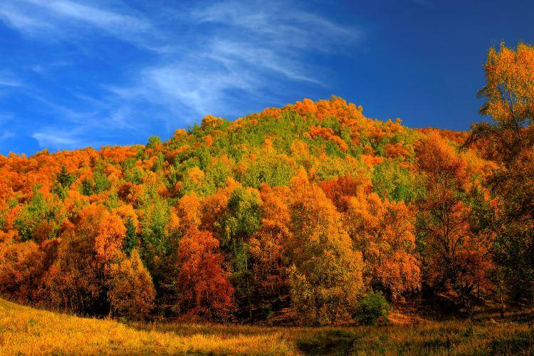 坎布拉國家森林公園4