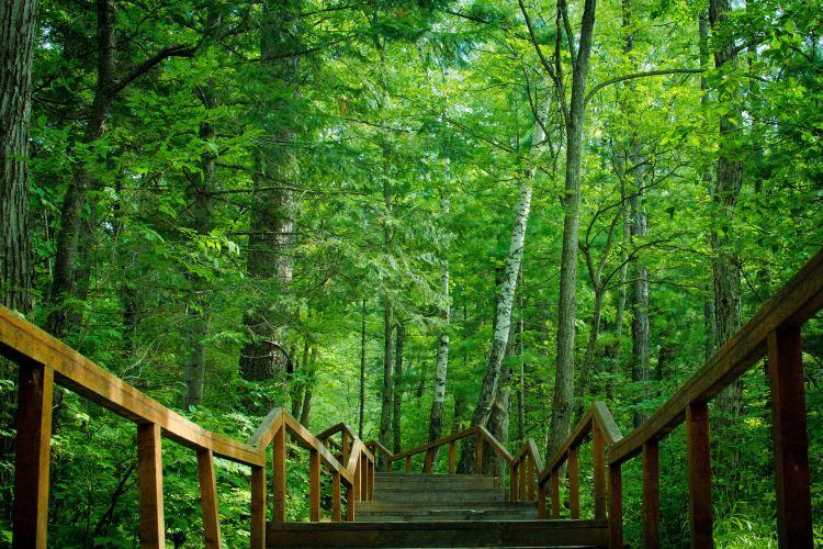 地下森林2