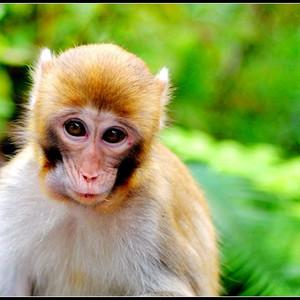 桂平游记图文-#我的2015#【桂平龙潭】猕猴百态引围观