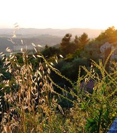[托斯卡纳大区游记图片] 托斯卡纳艳阳下的暮光之城-意大利托斯卡纳深度游