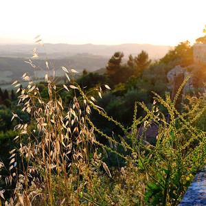 比萨游记图文-托斯卡纳艳阳下的暮光之城-意大利托斯卡纳深度游