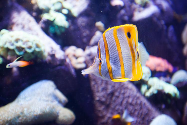 The Lost Chambers Aquarium4