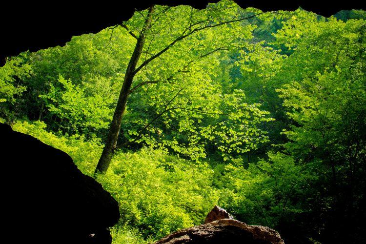 地下森林1