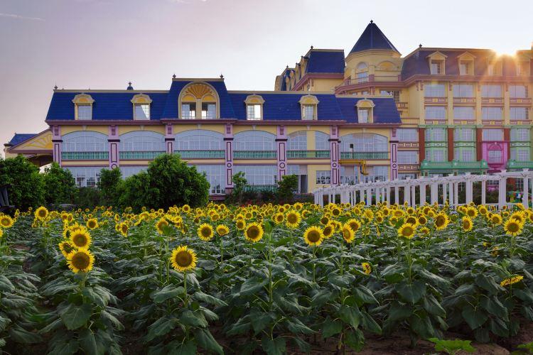 Million Sunflower Garden3