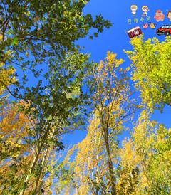 [张家口游记图片] 秋.色  草原天路~~在路上,第一次自驾