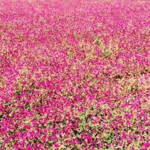 紫云水岸香草园旅游景点攻略图