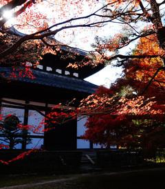 [京都游记图片] 旅行是毕生的追求之2015.11.17日本关西6日游(大阪+京都+奈良)--一场迟来的旅行