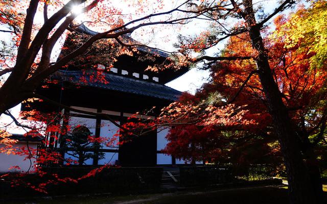 旅行是毕生的追求之2015.11.17日本关西6日游(大阪+京都+奈良)--一场迟来的旅行