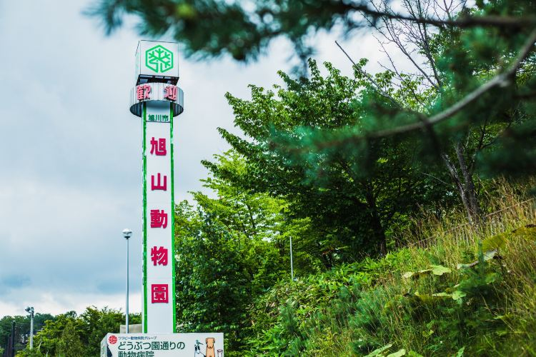 Asahiyama Zoo1