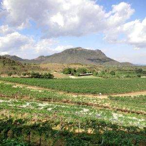 华欣山丘葡萄园旅游景点攻略图
