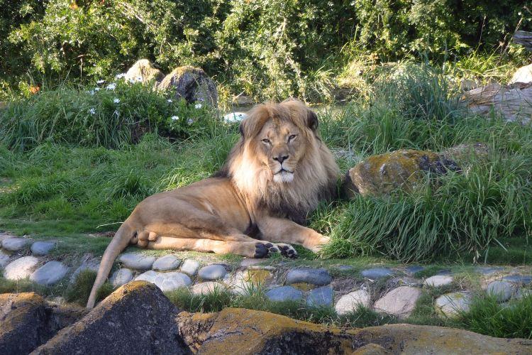 舊金山動物園1