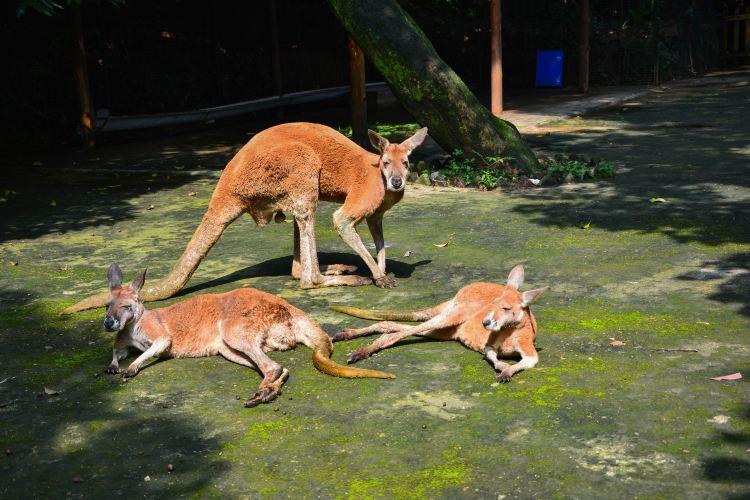 푸저우 동물원1