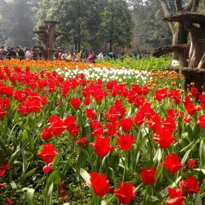 重庆花卉园旅游景点攻略图