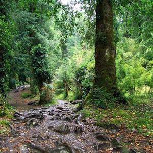 智利游记图文-天堂智利(南美原始雨林篇 Huerquehue)