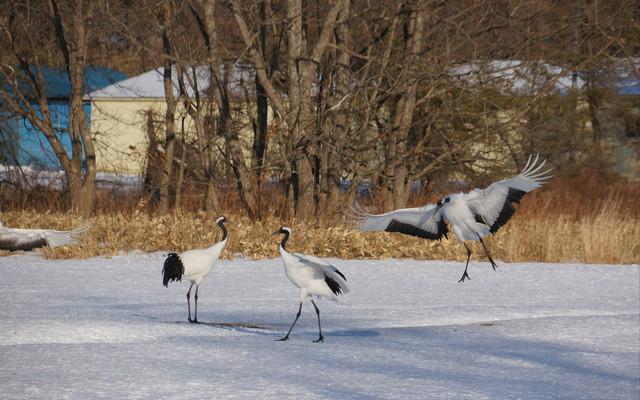 你要来看看冬天的『北海道』(2)
