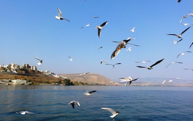 圣地之旅(3)提比利亚