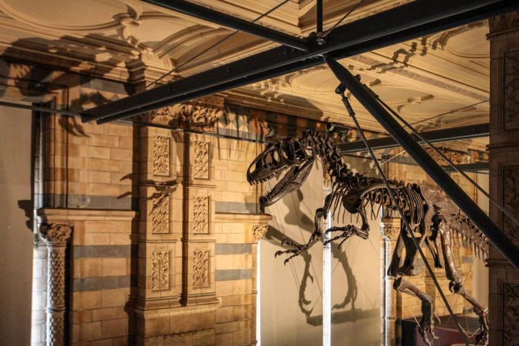 Natural History Museum3