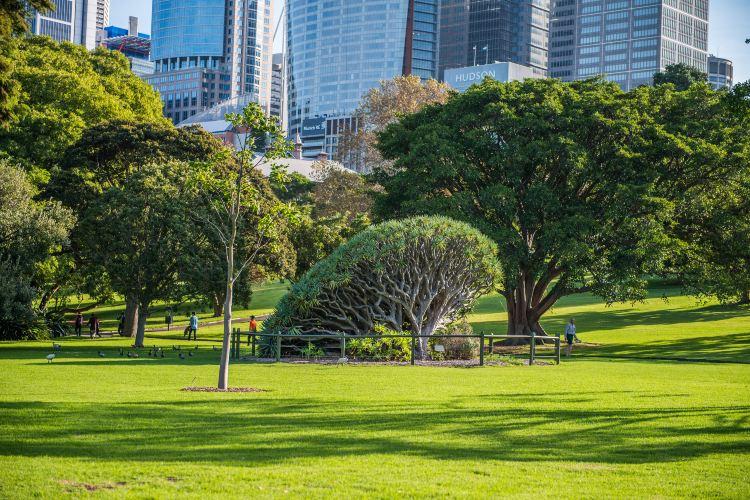 The Royal Botanic Garden Sydney3
