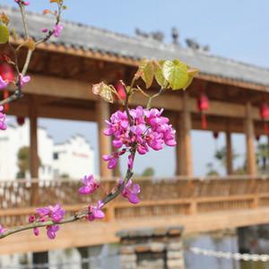 浦城游记图文-南平浦城印象小密