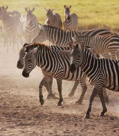 [肯尼亚游记图片] 2013肯尼亚游猎