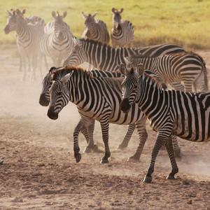 安博塞利游记图文-2013肯尼亚游猎