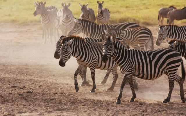 2013肯尼亚游猎