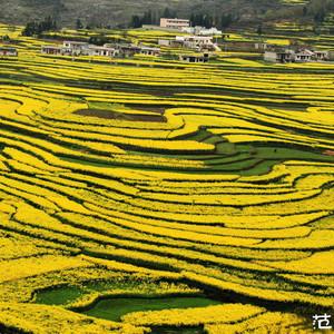 贵定游记图文-春游贵州:你不知道的贵州到底有多美(深度自驾游春天贵州)
