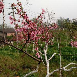 大邑植物园旅游景点攻略图
