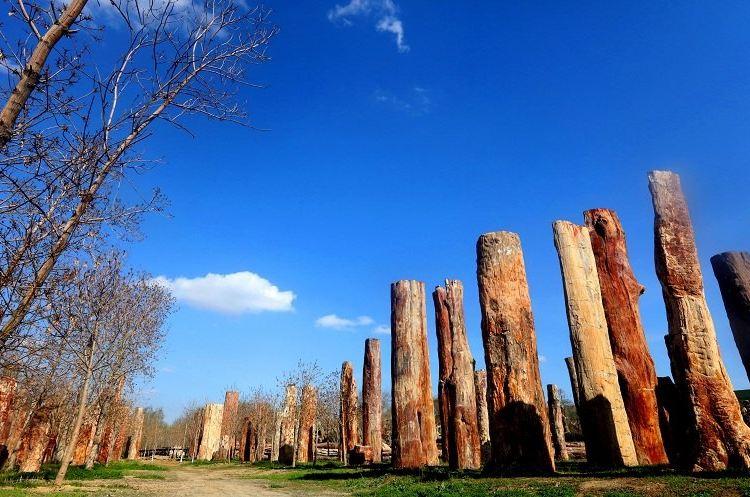 新疆古生態園2
