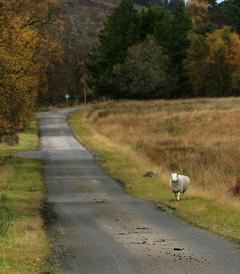 [外赫布里底群岛游记图片] 苏格兰高地,我是去上学,但也为了旅游