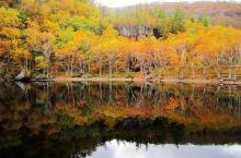 秋色斑斓   秋日长白山,以漫山遍野之势,铺陈醉人秋景