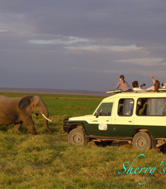 [内罗毕游记图片] 走进非洲-2011年8月肯尼亚之旅