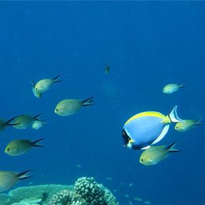库克群岛游记图文-非热门度假地之完全攻略————库克群岛