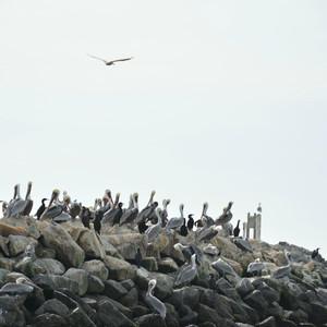 蒙特雷游记图文-加州鹿角沼泽Elkhorn Slough Safari