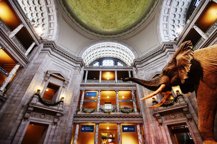 史密森尼國家自然歷史博物館3