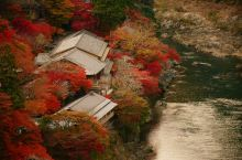 枫情万种,谁敢说这不是京都最美的季节?