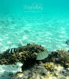 [蓝色美人蕉岛游记图片] 马尔代夫蓝色美人蕉岛