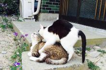 在猫岛——大自然对孤独岛屿的眷顾
