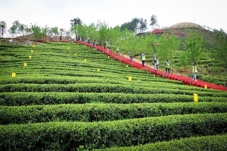 Erlong Tea Farm2