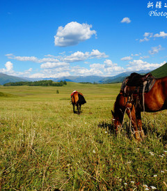 [新疆游记图片] 间隔年之环游中国第四站——17天4000+公里北疆大环线