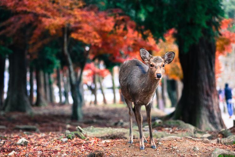 Nara Park2