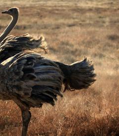 [肯尼亚游记图片] 2013梦幻非洲行(上)肯尼亚篇
