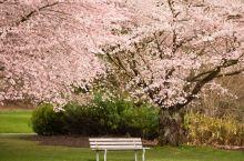 春❀北美双城赏花记,观嫣红姹紫,听花语芬芳