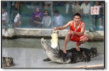 佛源泰国:是拉差龙虎园