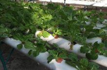 太阳岛自然公园:里面种植了各种热带水果和蔬菜,他们的蔬菜多数是种在海绵上的。岛上尽量采取自给自足的生