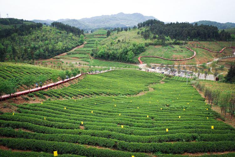 Erlong Tea Farm1