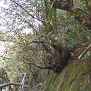 溪头天门峡谷旅游景点攻略图