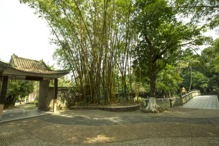 Guangxi Medical Botanical Garden4