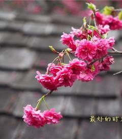 [台湾游记图片] 台湾,我前世的故乡