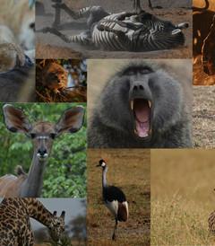 [乞力马扎罗山国家公园游记图片] 我的东非 我的Kilimanjaro
